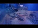 я с акулой-нянькой